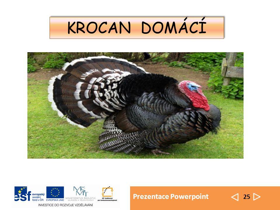 Prezentace Powerpoint 25 KROCAN DOMÁCÍ
