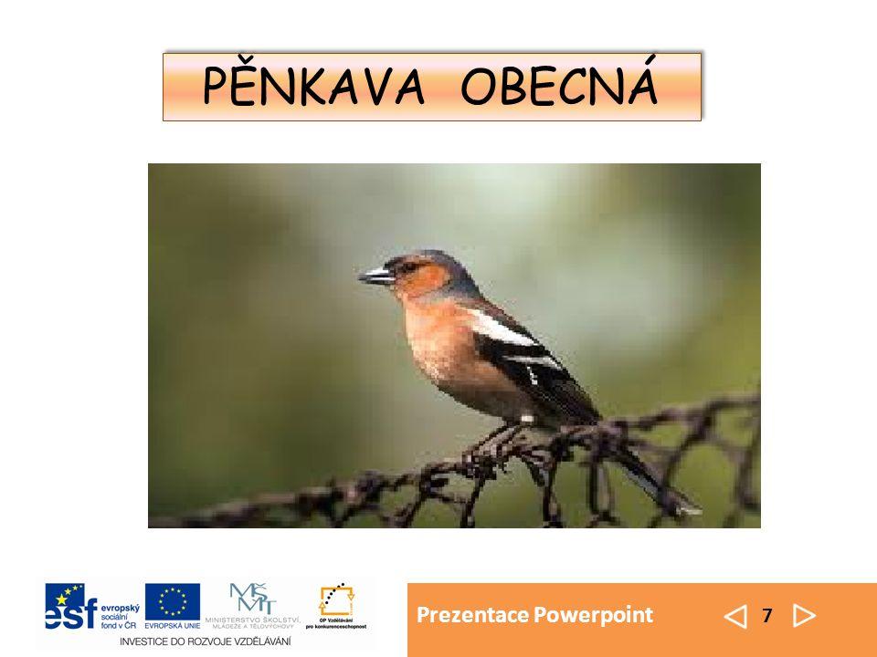 Prezentace Powerpoint 7 PĚNKAVA OBECNÁ