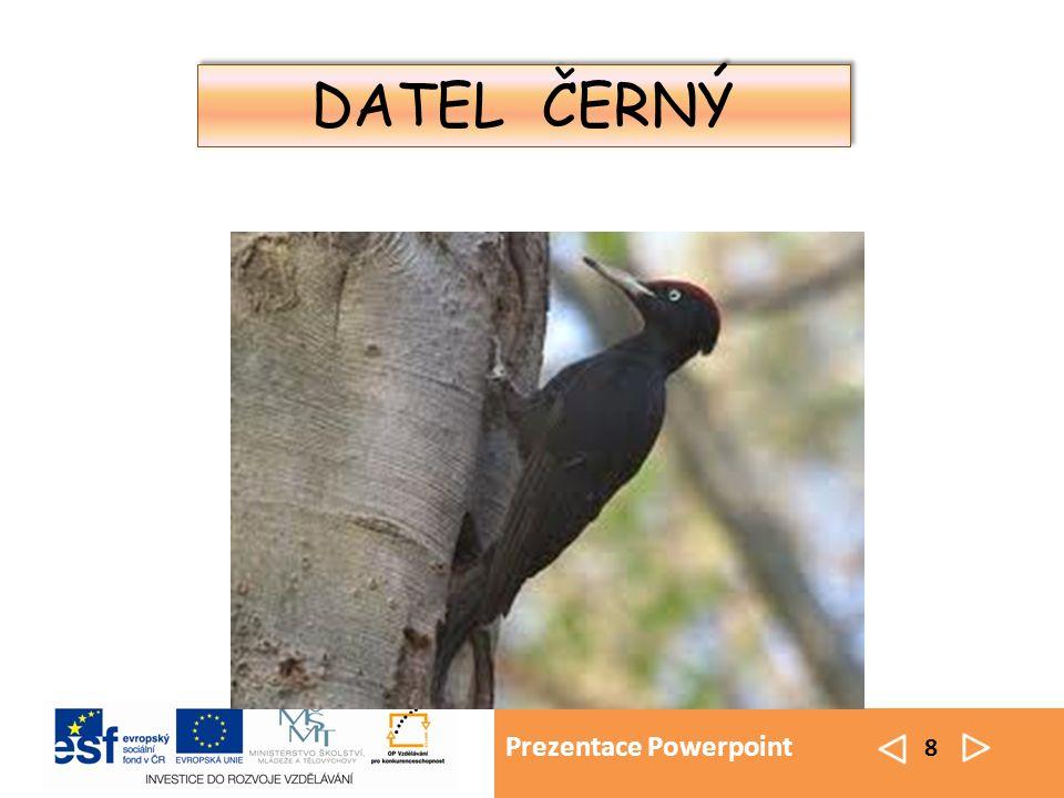 Prezentace Powerpoint 8 DATEL ČERNÝ