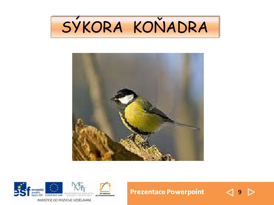 Prezentace Powerpoint 9 SÝKORA KOŇADRA