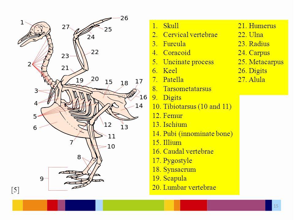 1.Skull 2.Cervical vertebrae 3.Furcula 4.Coracoid 5.Uncinate process 6.Keel 7.Patella 8.Tarsometatarsus 9.Digits 10.Tibiotarsus (10 and 11) 12.