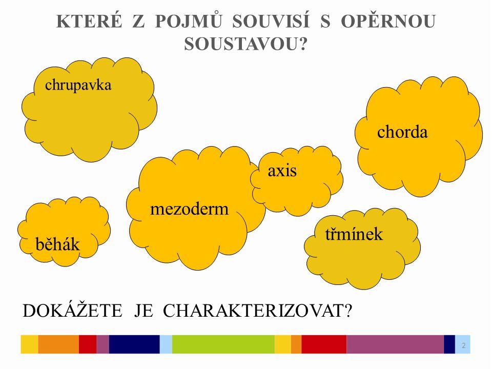 STRUNATCI Na obrázku je schéma těla kopinatce plžovitého, kterého řadíme do kmene strunatců, tzn.