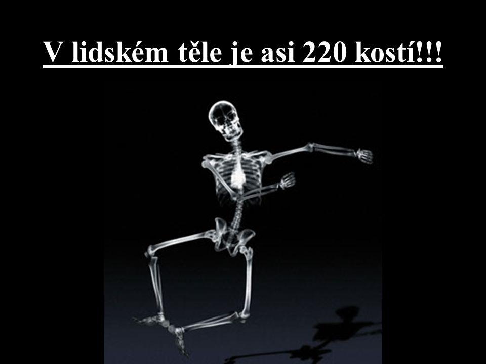 V lidském těle je asi 220 kostí!!!