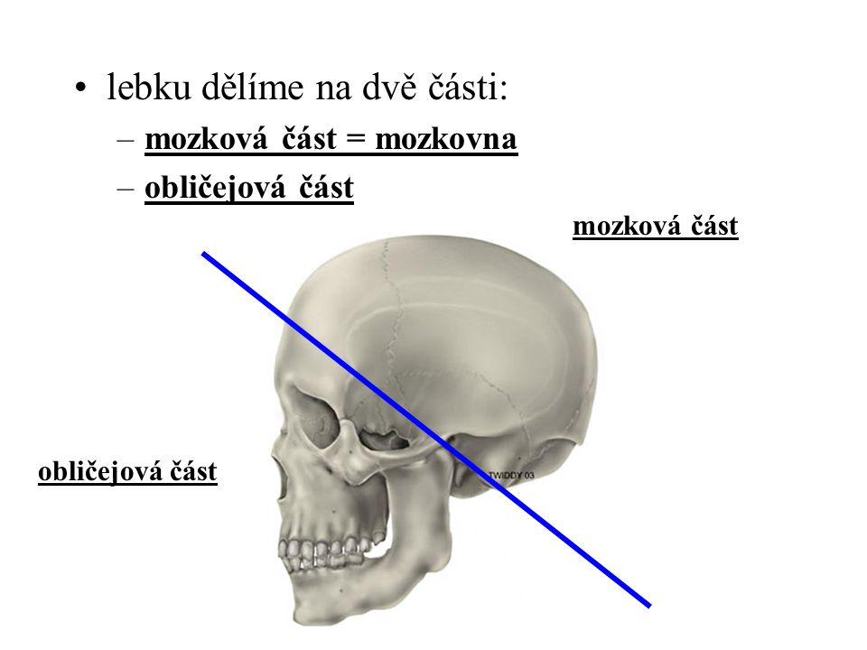 lebku dělíme na dvě části: –mozková část = mozkovna –obličejová část mozková část obličejová část