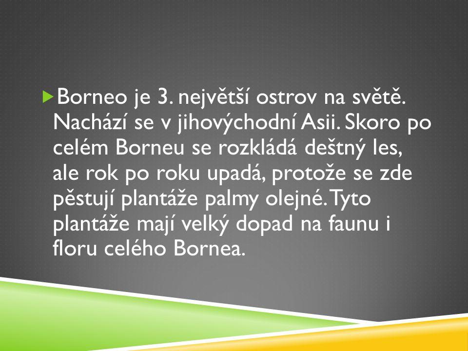  Borneo je 3. největší ostrov na světě. Nachází se v jihovýchodní Asii. Skoro po celém Borneu se rozkládá deštný les, ale rok po roku upadá, protože