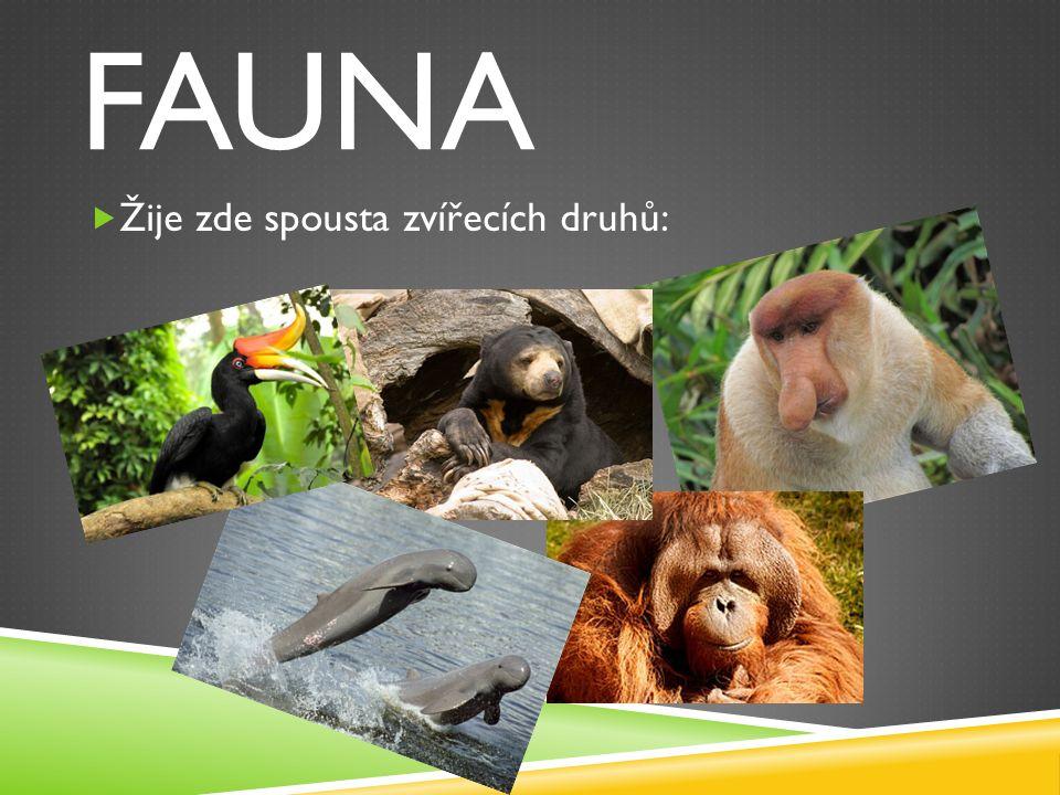 FAUNA  Žije zde spousta zvířecích druhů: