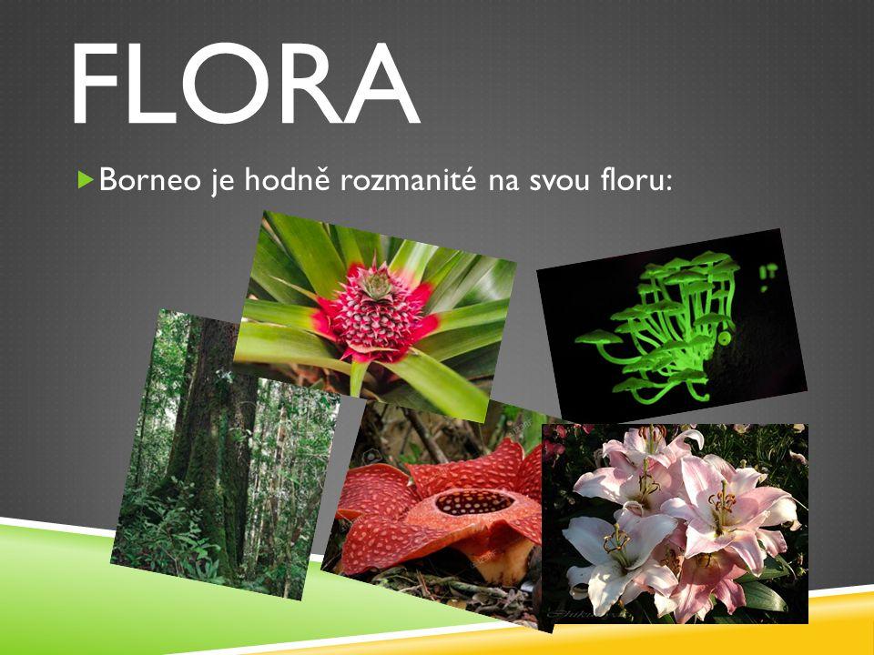 FLORA  Borneo je hodně rozmanité na svou floru: