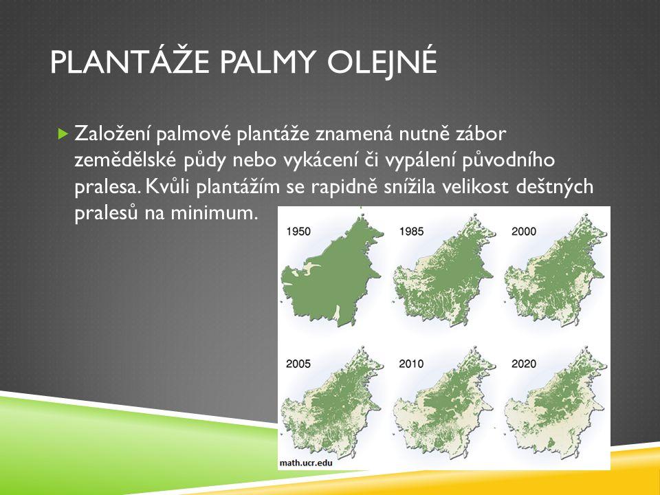 PLANTÁŽE PALMY OLEJNÉ  Založení palmové plantáže znamená nutně zábor zemědělské půdy nebo vykácení či vypálení původního pralesa. Kvůli plantážím se