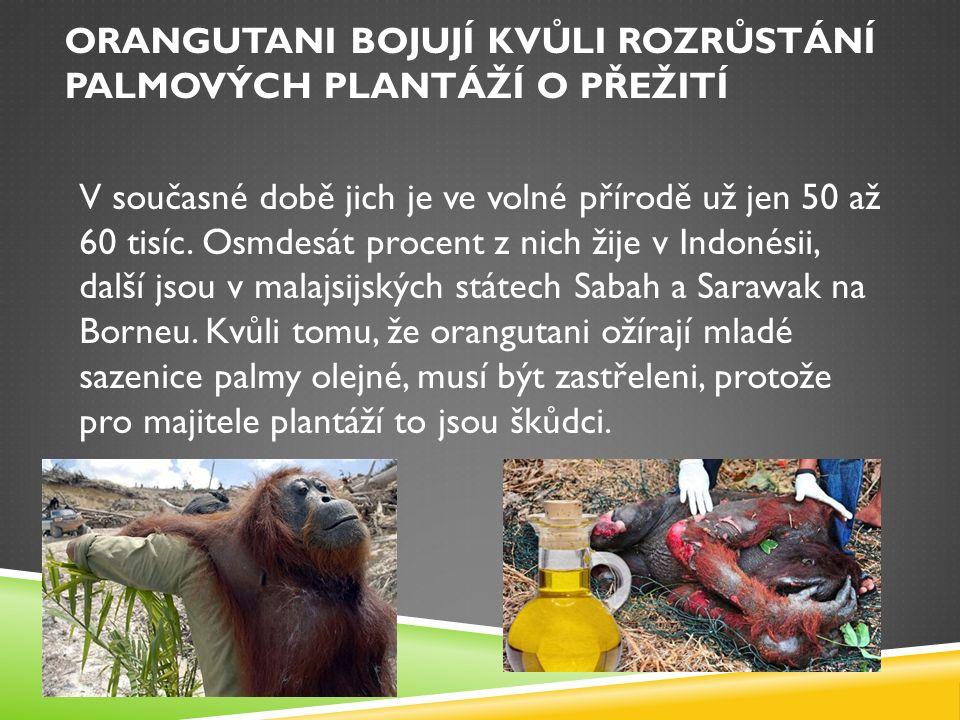 ZDROJE  http://tn.nova.cz/tema/19304-orangutani http://tn.nova.cz/tema/19304-orangutani  http://zpravy.idnes.cz/orangutani-bojuji-kvuli-rozrustani-palmovych-plantazi- o-preziti-1ce-/zahranicni.aspx?c=A091108_121518_vedatech_stf http://zpravy.idnes.cz/orangutani-bojuji-kvuli-rozrustani-palmovych-plantazi- o-preziti-1ce-/zahranicni.aspx?c=A091108_121518_vedatech_stf  https://cs.wikipedia.org/wiki/Borneo https://cs.wikipedia.org/wiki/Borneo  http://cestovani.idnes.cz/unikatni-priroda-plaze-i-lovci-lebek-to-je-borneo- treti-nejvetsi-ostrov-sveta-1x2-/kolem- sveta.aspx?c=A100622_104914_igsvet_ber http://cestovani.idnes.cz/unikatni-priroda-plaze-i-lovci-lebek-to-je-borneo- treti-nejvetsi-ostrov-sveta-1x2-/kolem- sveta.aspx?c=A100622_104914_igsvet_ber  http://glopolis.org/cs/palmovy-olej/indonesie/ http://glopolis.org/cs/palmovy-olej/indonesie/  http://ekolist.cz/cz/zpravodajstvi/zpravy/plantaze-palmoveho-oleje-nici- pralesy-i-obzivu-mistnich-obyvatel http://ekolist.cz/cz/zpravodajstvi/zpravy/plantaze-palmoveho-oleje-nici- pralesy-i-obzivu-mistnich-obyvatel  Projekt Pesisir Balikpapan | ZOO Ústí nad Labem Projekt Pesisir Balikpapan | ZOO Ústí nad Labem