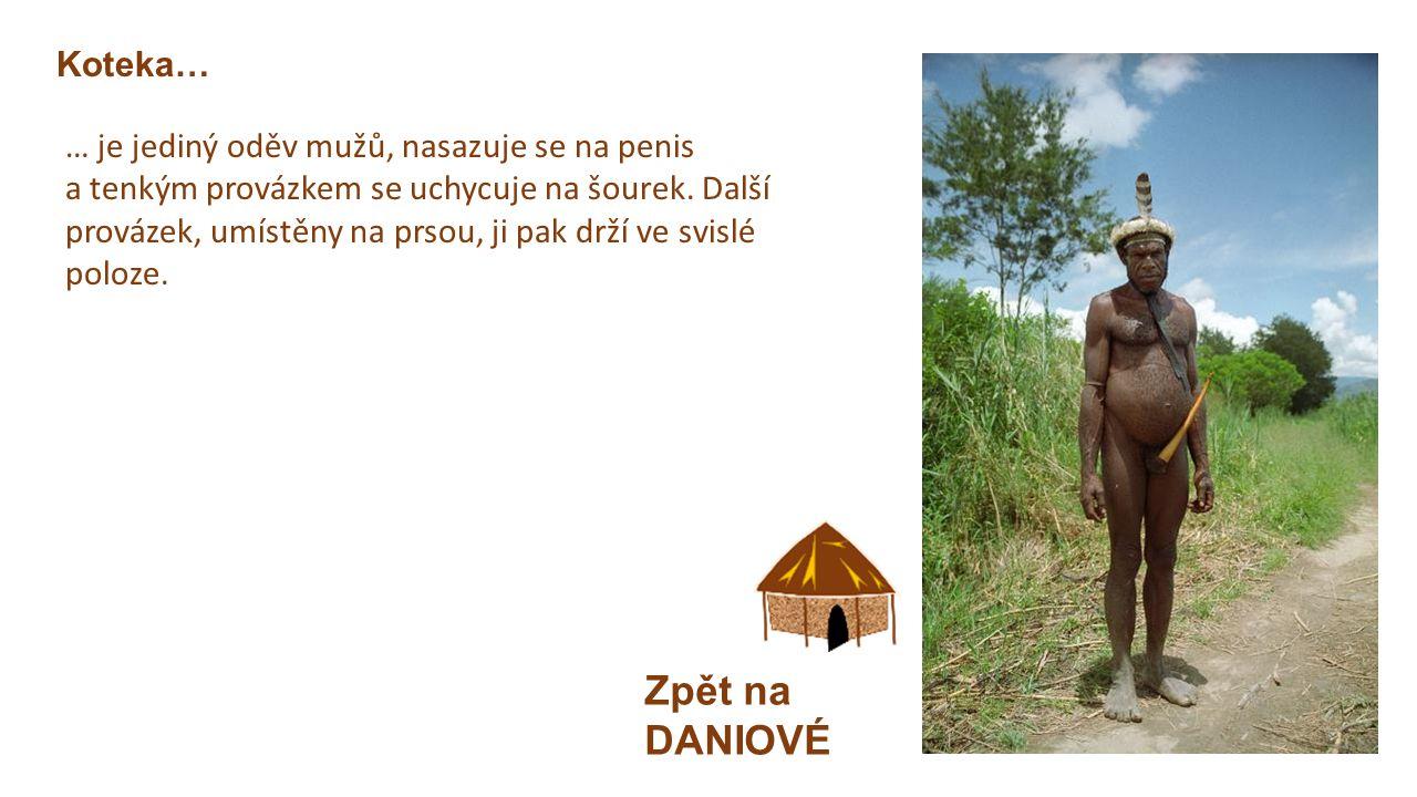 DANIOVÉ Zpět na mapu Západní Papua  Dříve lovci lebek  Zemědělci  Muži  Ozdobou vážených mužů je kravata z ulit měkkýšů.