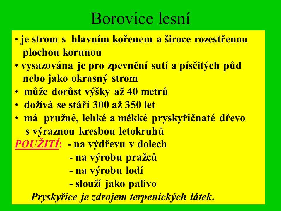 http://www.biolib.cz/IMG/GAL/3597.jpg http://www.biolib.cz/IMG/GAL/14809.jpg http://fotky.yuhu.cz/uploaded_images/borovice-kura-727106.jpg http://www.biolib.cz/IMG/GAL/22634.jpg http://www.wallpaper.cz/primo/ir2/sisky_smrku--c2048xc1440.jpg http://cs.wikipedia.org/wiki/Smrk_ztepil%C3%BD http://cs.wikipedia.org/wiki/Soubor:Abies_alba_Orjen.jpg http://cs.wikipedia.org/wiki/Soubor:Furnier_tanne.jpg http://www.garten.cz/a/cz/4550-charakteristika-druhu-drev-smrk http://www.garten.cz/a/cz/4570-charakteristika-druhu-drev-modrin/ http://www.garten.cz/a/cz/4553-charakteristika-druhu-drev-borovice/ http://www.kopecek.pionyr.cz/nauc/drevo/jedle-02-s.jpg http://cs.wikipedia.org/wiki/Soubor:Ips.typographus.jpg http://cs.wikipedia.org/wiki/Soubor:Lymantria_monacha02.jpg Použité zdroje