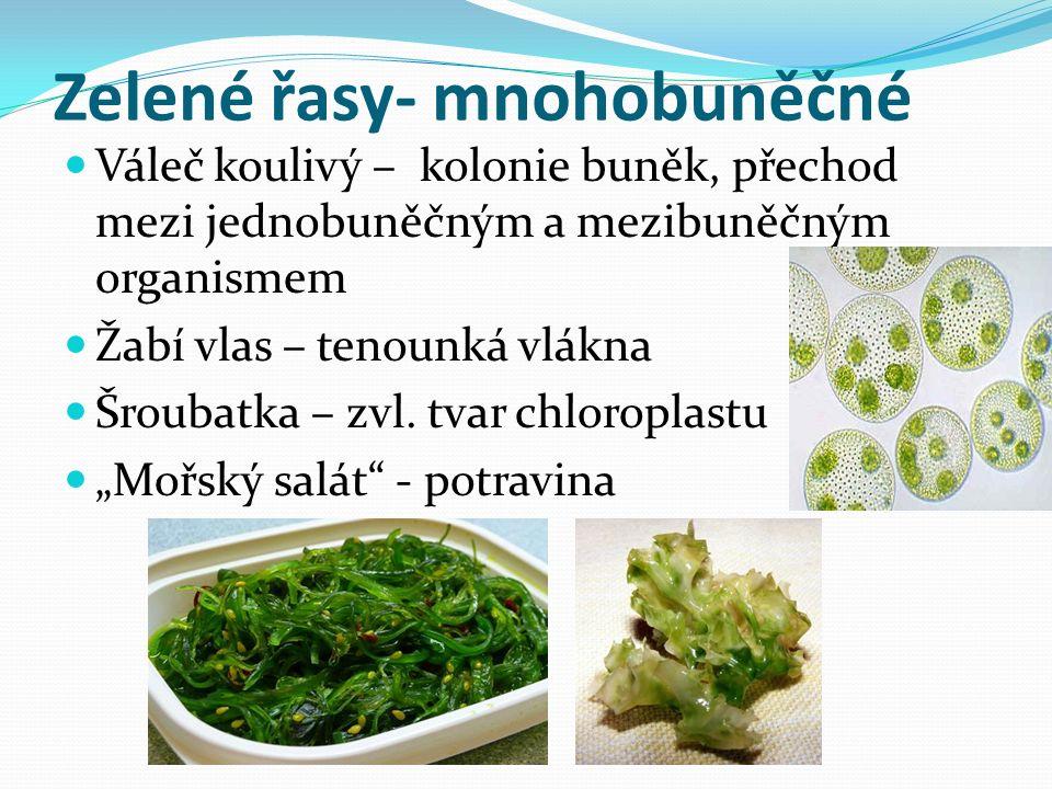 Zelené řasy- mnohobuněčné Váleč koulivý – kolonie buněk, přechod mezi jednobuněčným a mezibuněčným organismem Žabí vlas – tenounká vlákna Šroubatka – zvl.