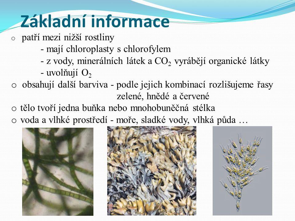 Základní informace o patří mezi nižší rostliny - mají chloroplasty s chlorofylem - z vody, minerálních látek a CO 2 vyrábějí organické látky - uvolňují O 2 o obsahují další barviva - podle jejich kombinací rozlišujeme řasy zelené, hnědé a červené o tělo tvoří jedna buňka nebo mnohobuněčná stélka o voda a vlhké prostředí - moře, sladké vody, vlhká půda …