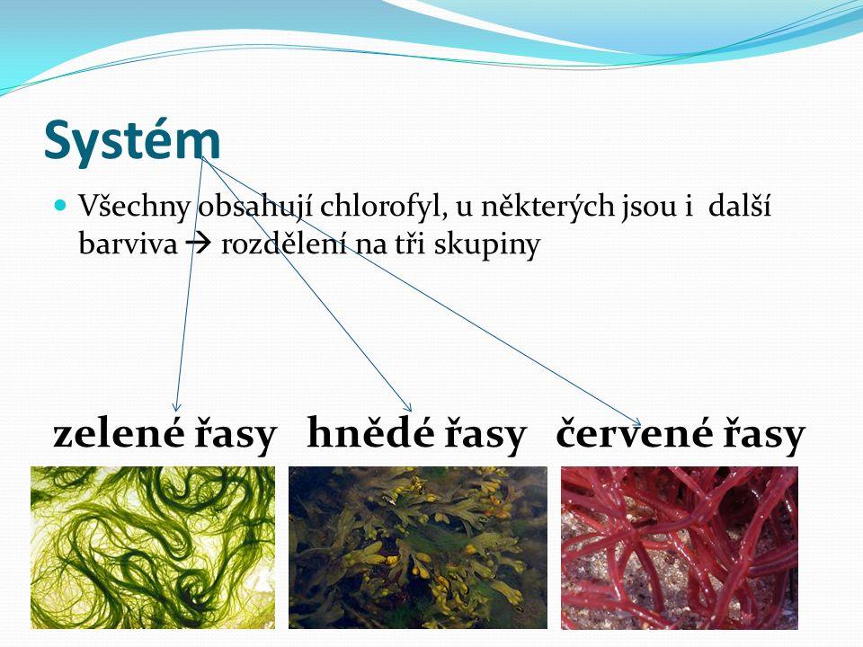 Systém Všechny obsahují chlorofyl, u některých jsou i další barviva  rozdělení na tři skupiny zelené řasy hnědé řasy červené řasy