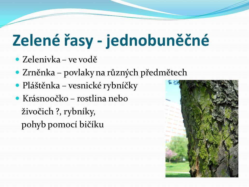 Zelené řasy - jednobuněčné Zelenivka – ve vodě Zrněnka – povlaky na různých předmětech Pláštěnka – vesnické rybníčky Krásnoočko – rostlina nebo živočich , rybníky, pohyb pomocí bičíku