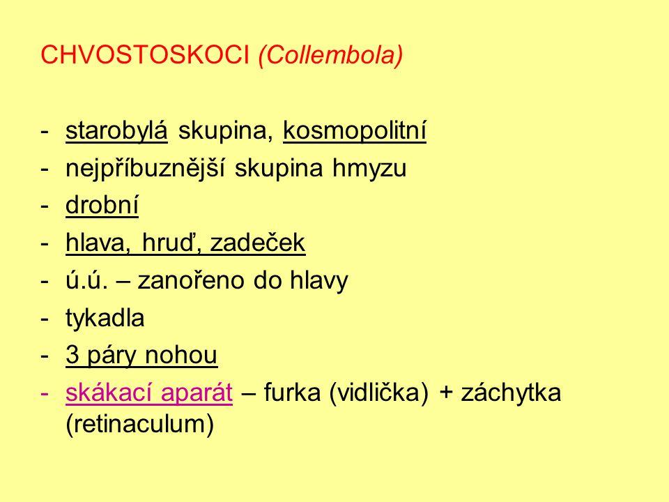 CHVOSTOSKOCI (Collembola) -starobylá skupina, kosmopolitní -nejpříbuznější skupina hmyzu -drobní -hlava, hruď, zadeček -ú.ú.