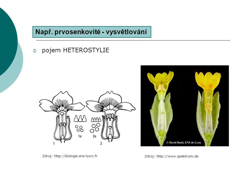  pojem HETEROSTYLIE Např. prvosenkovité - vysvětlování Zdroj: http://biologie.ens-lyon.fr Zdroj: http://www.spektrum.de