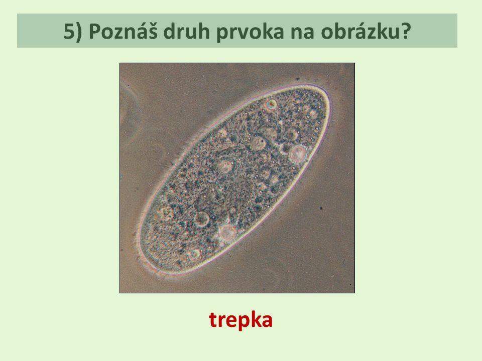 5) Poznáš druh prvoka na obrázku? trepka