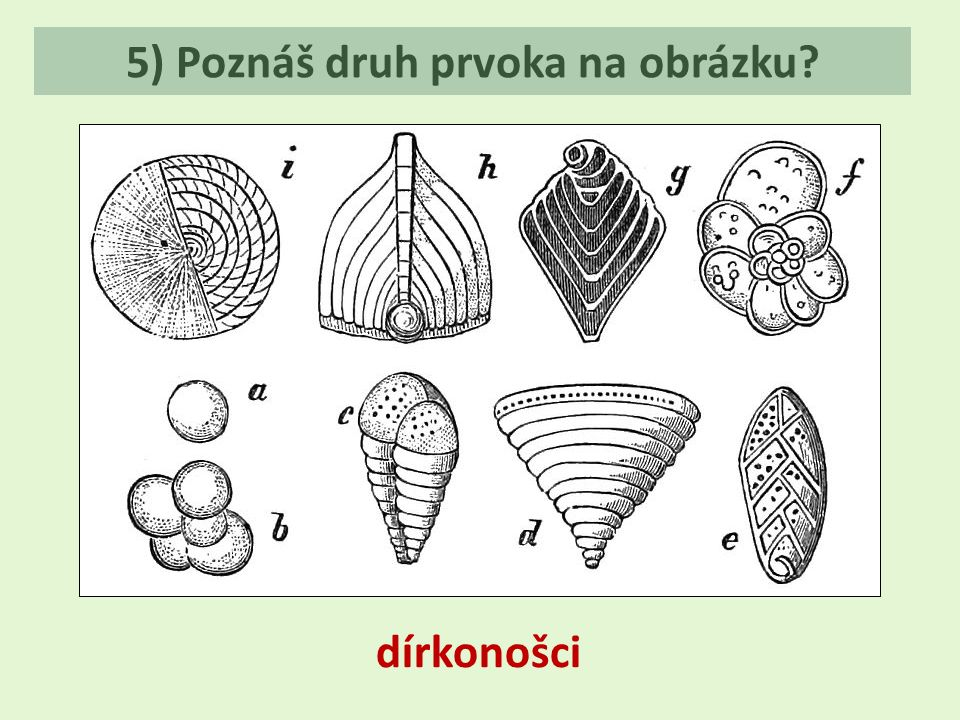 5) Poznáš druh prvoka na obrázku? dírkonošci