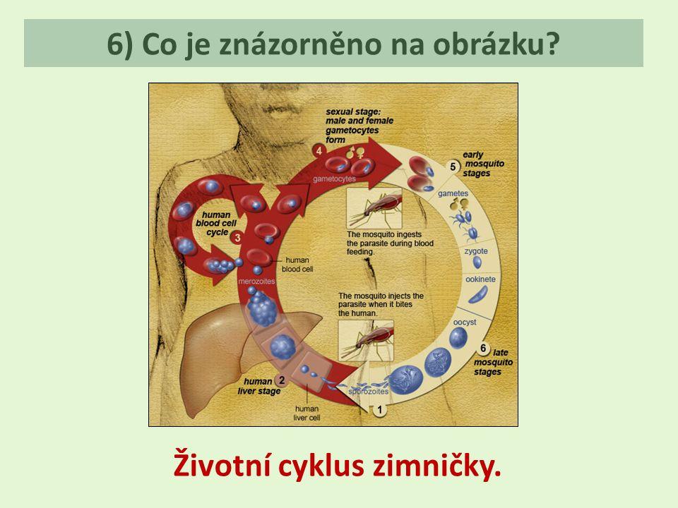 6) Co je znázorněno na obrázku? Životní cyklus zimničky.