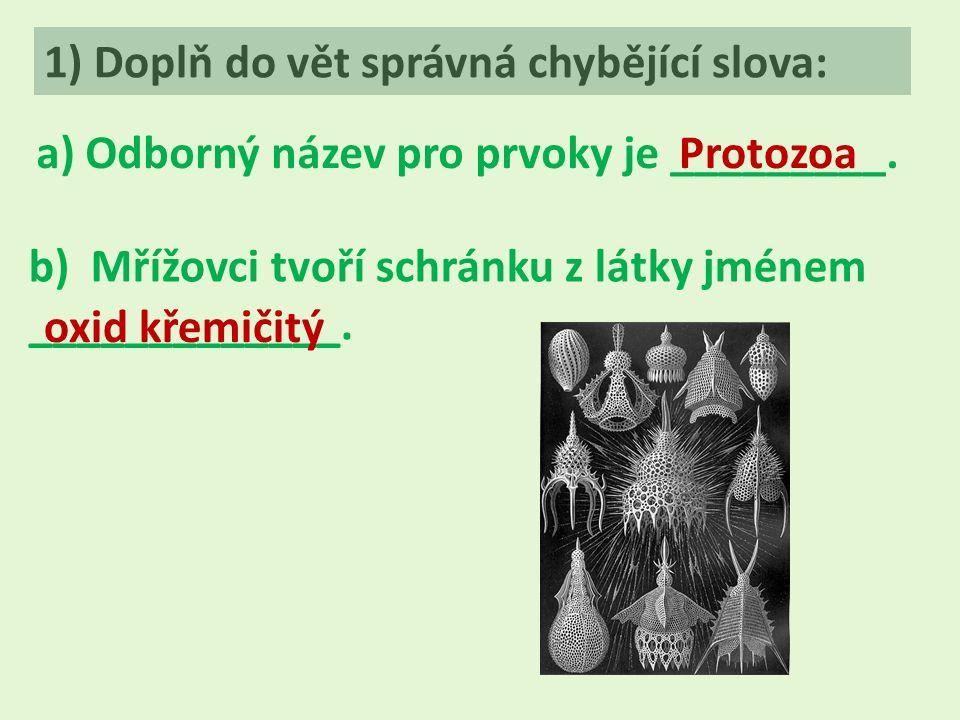 1) Doplň do vět správná chybějící slova: a) Odborný název pro prvoky je _________.