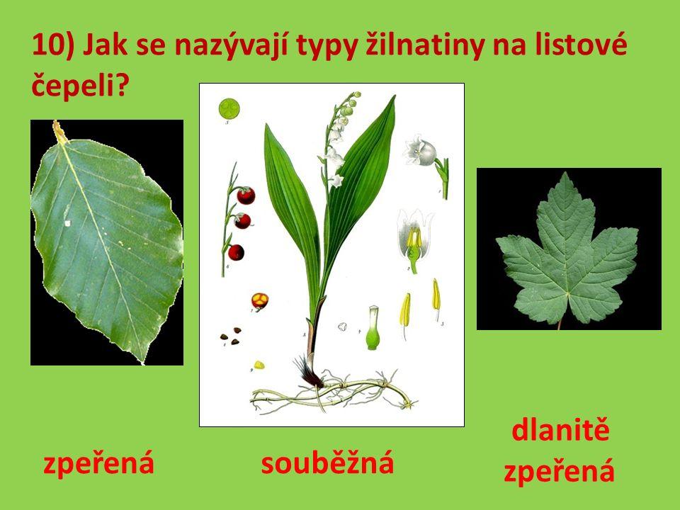 10) Jak se nazývají typy žilnatiny na listové čepeli zpeřená souběžná dlanitě zpeřená