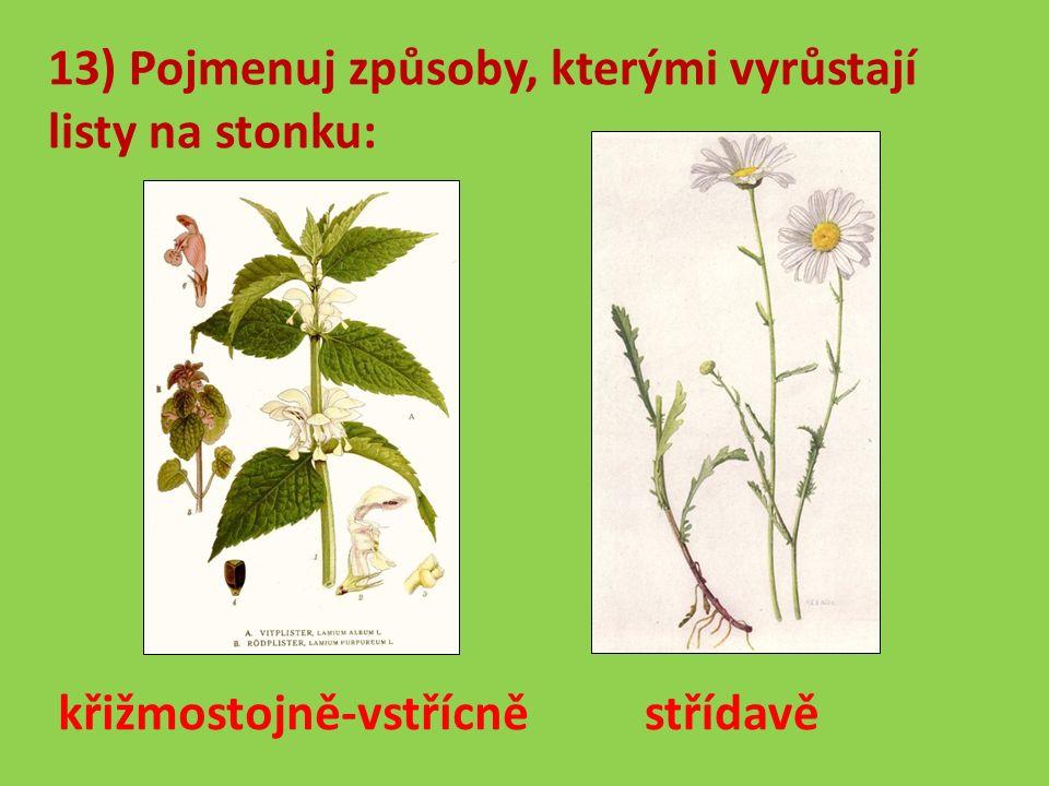 13) Pojmenuj způsoby, kterými vyrůstají listy na stonku: střídavě křižmostojně-vstřícně