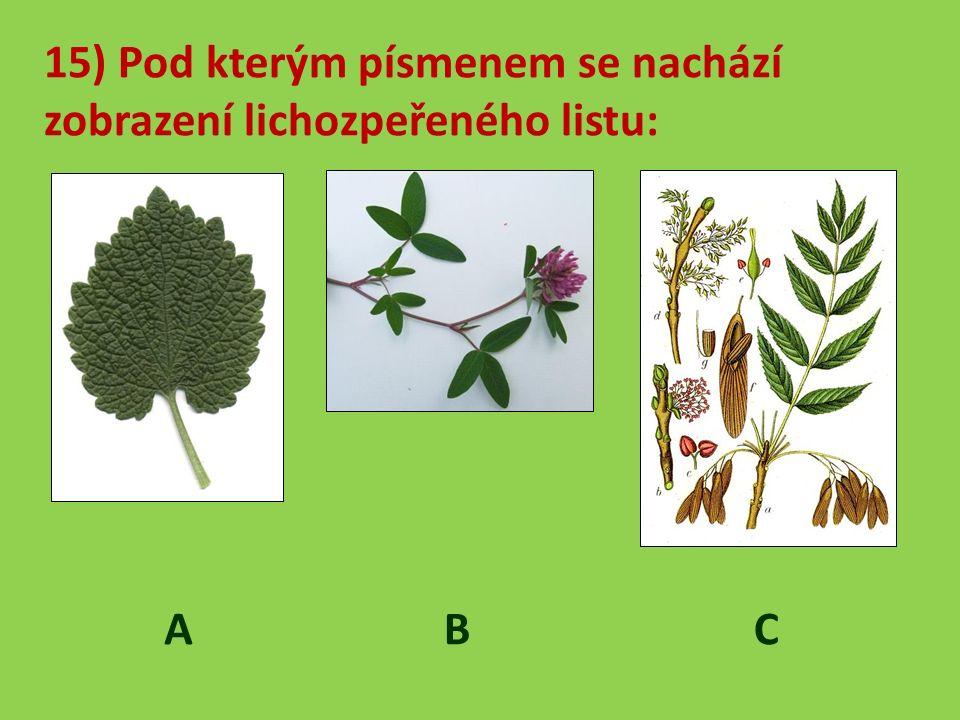 15) Pod kterým písmenem se nachází zobrazení lichozpeřeného listu: A B C