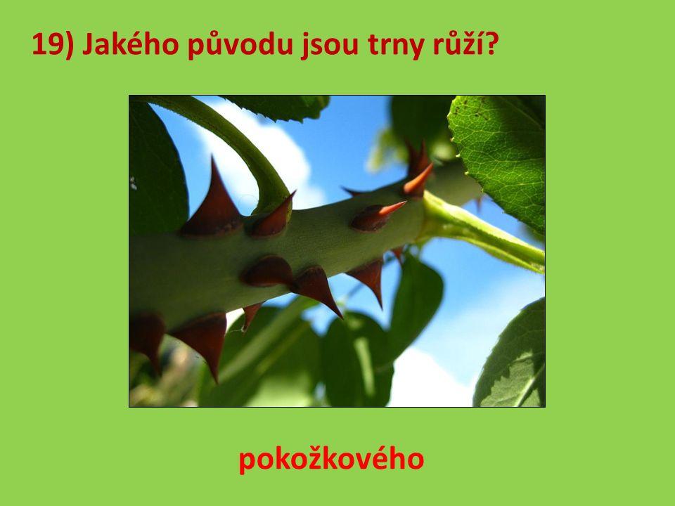 19) Jakého původu jsou trny růží pokožkového
