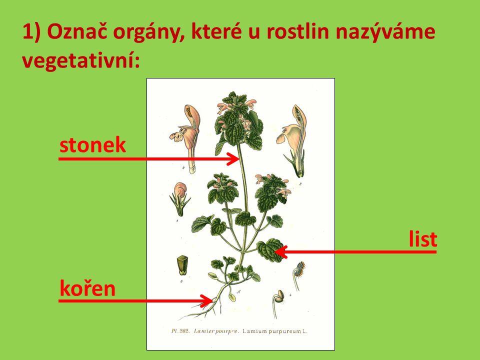 1) Označ orgány, které u rostlin nazýváme vegetativní: stonek kořen list