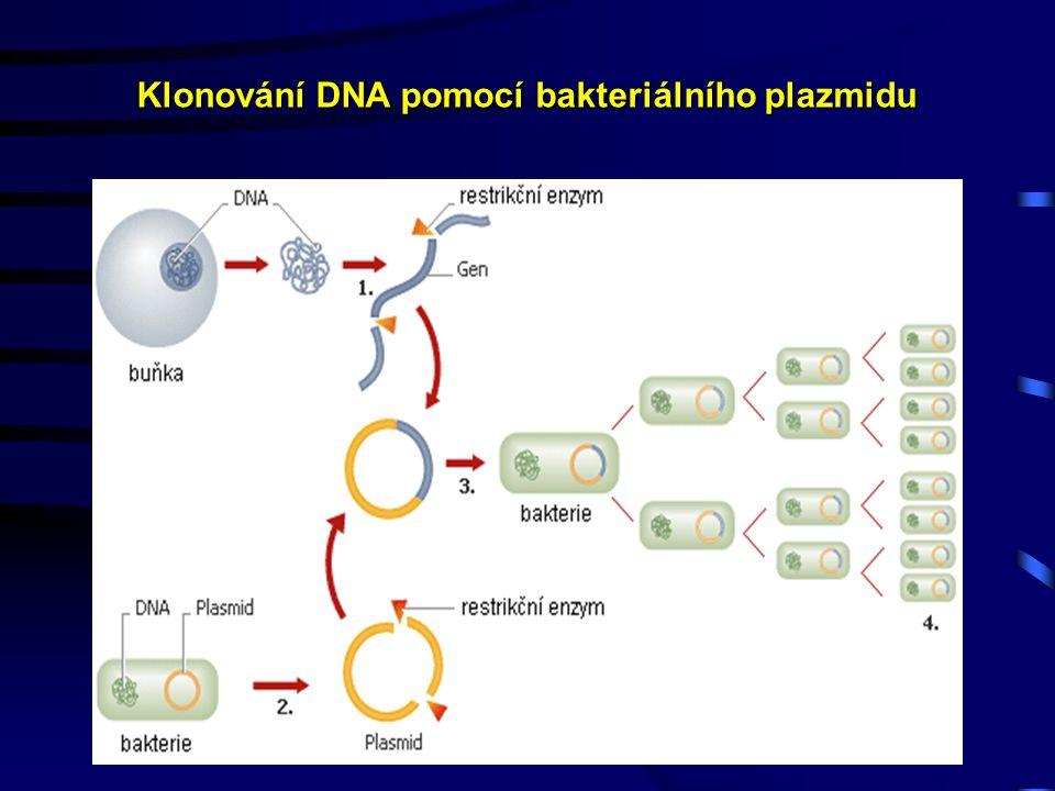 Klonování DNA pomocí bakteriálního plazmidu