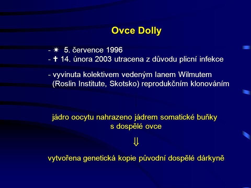 Ovce Dolly -  5.července 1996 -  14.
