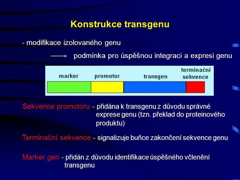 Konstrukce transgenu - modifikace izolovaného genu podmínka pro úspěšnou integraci a expresi genu Sekvence promotoru - přidána k transgenu z důvodu správné exprese genu (tzn.