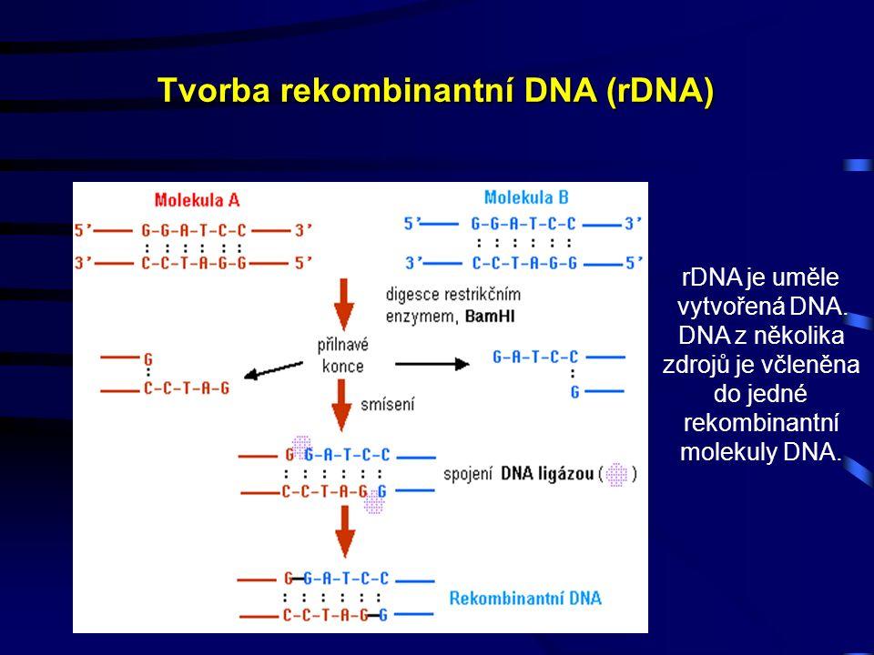 Tvorba rekombinantní DNA (rDNA) rDNA je uměle vytvořená DNA.