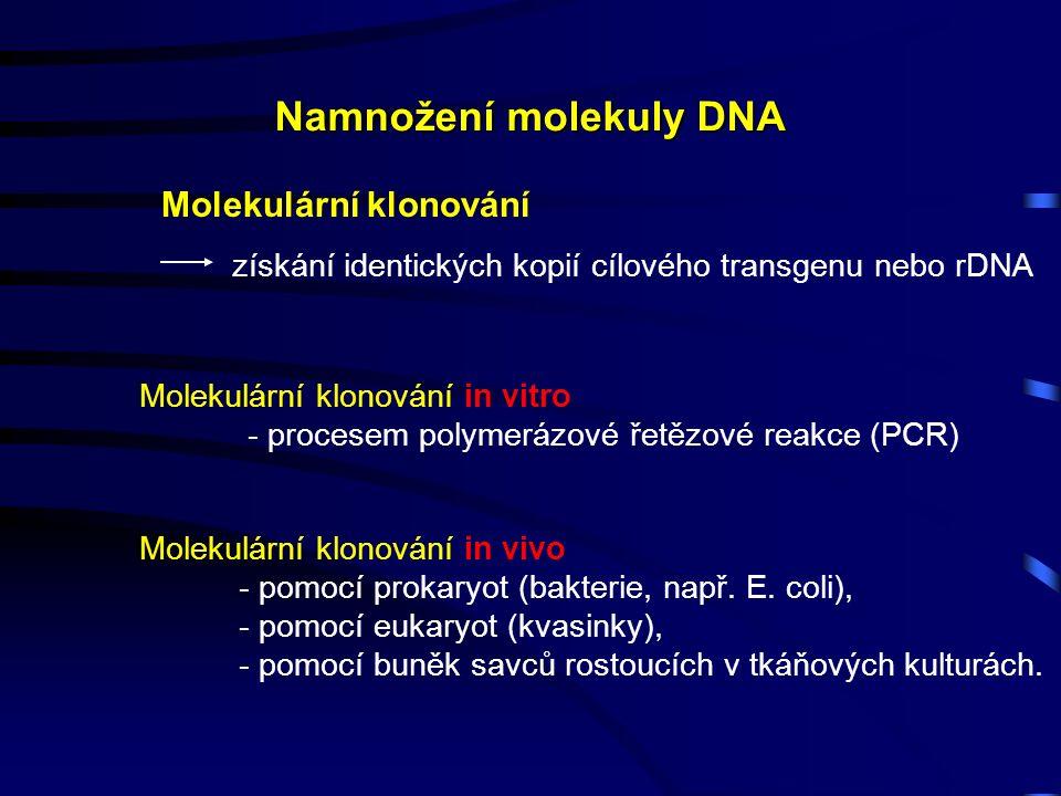Namnožení molekuly DNA získání identických kopií cílového transgenu nebo rDNA Molekulární klonování Molekulární klonování in vitro - procesem polymerázové řetězové reakce (PCR) Molekulární klonování in vivo - pomocí prokaryot (bakterie, např.