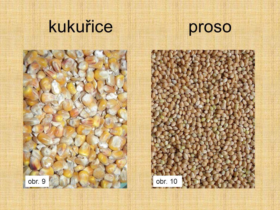 kukuřice proso obr. 9obr. 10