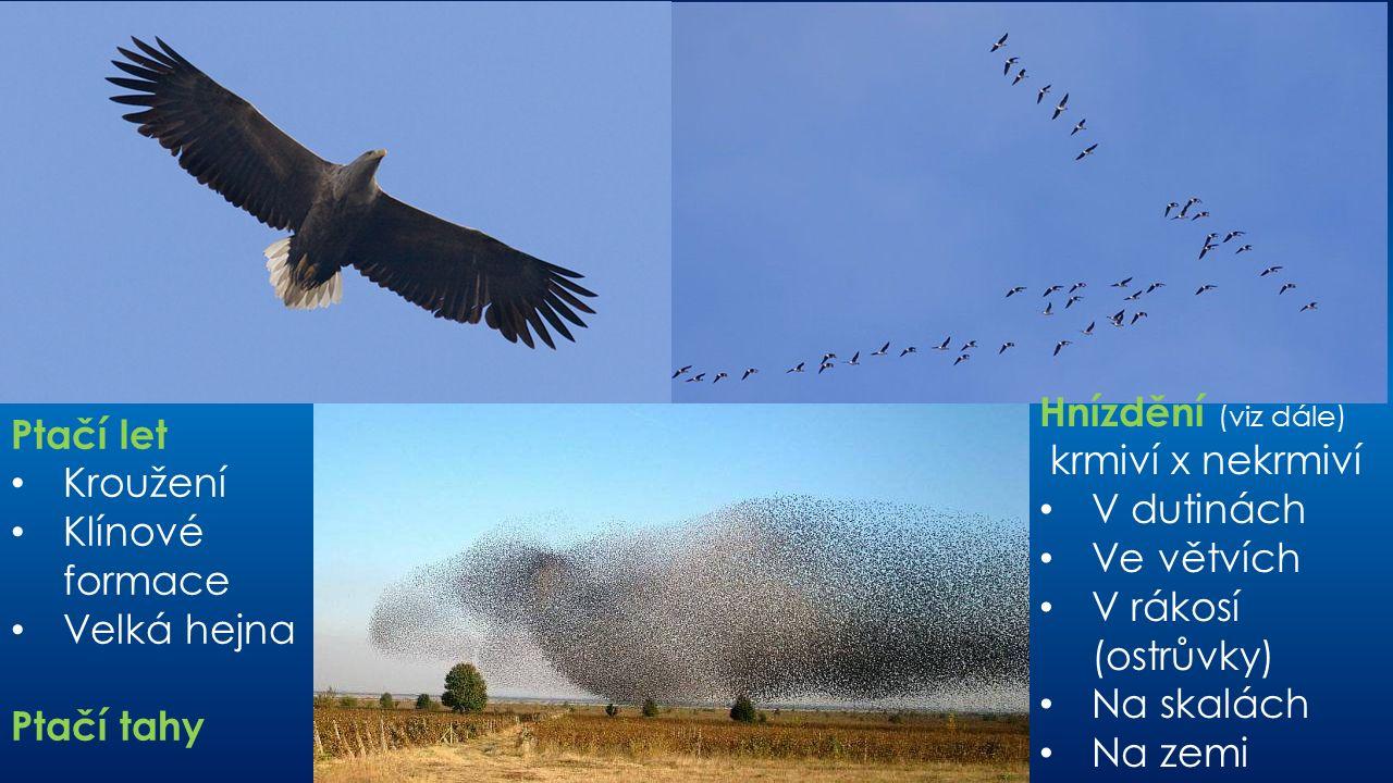 Ptačí let Kroužení Klínové formace Velká hejna Ptačí tahy Hnízdění (viz dále) krmiví x nekrmiví V dutinách Ve větvích V rákosí (ostrůvky) Na skalách Na zemi