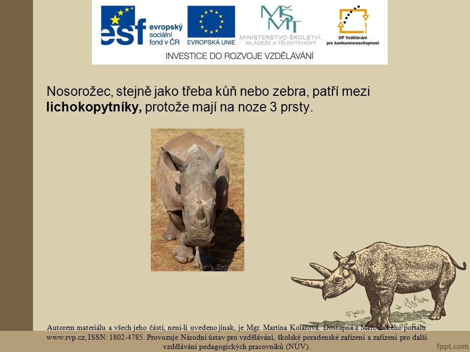 Nosorožec, stejně jako třeba kůň nebo zebra, patří mezi lichokopytníky, protože mají na noze 3 prsty.