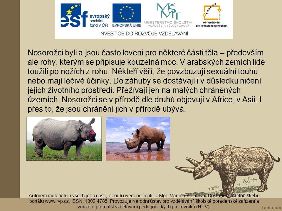 K jakým kopytníkům se nosorožci řadí.Jací živočichové patří k druhému druhu kopytníků.