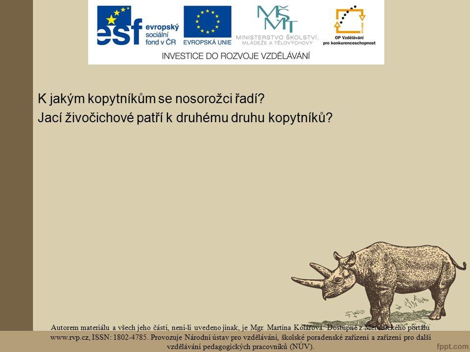 K jakým kopytníkům se nosorožci řadí. Jací živočichové patří k druhému druhu kopytníků.