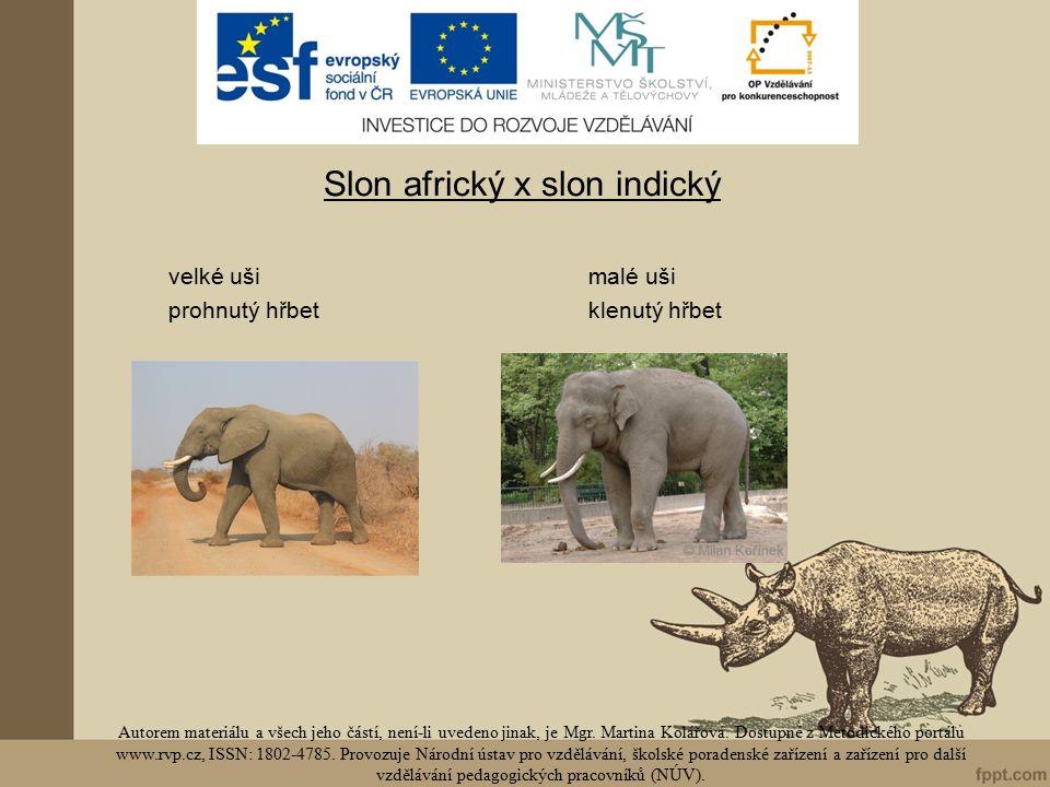 Slon africký x slon indický velké ušimalé uši prohnutý hřbetklenutý hřbet Autorem materiálu a všech jeho částí, není-li uvedeno jinak, je Mgr.