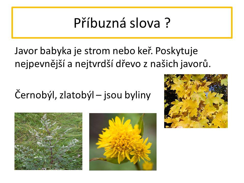 Příbuzná slova ? Javor babyka je strom nebo keř. Poskytuje nejpevnější a nejtvrdší dřevo z našich javorů. Černobýl, zlatobýl – jsou byliny