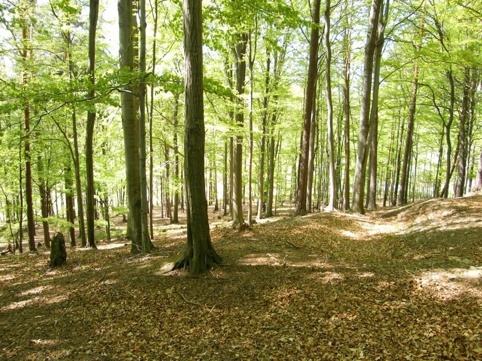 KLOKOTY u TÁBORA staré poutní místo dříve bylo nazýváno Hora Klokotská o názvu proč jsou uvedeny dvě legendy: 1.název dostaly po keři KLOKOČÍ (růžence), které rostlo právě na místě, kde Klokoty stojí.