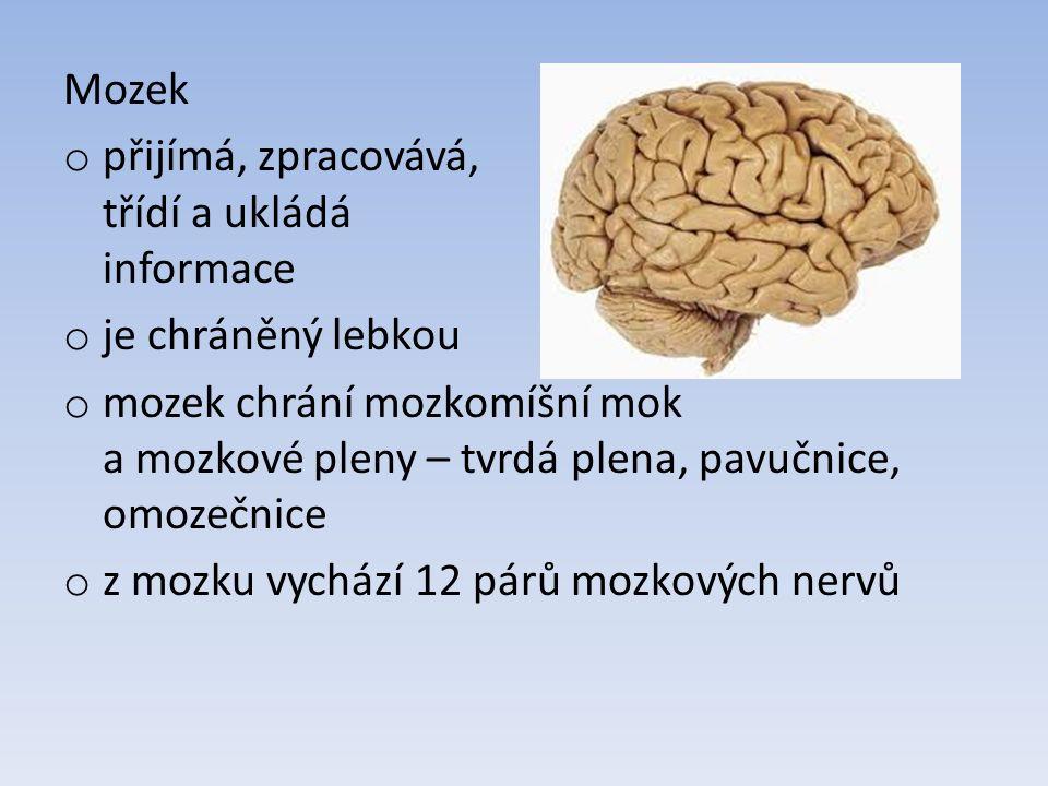 Mozek o přijímá, zpracovává, třídí a ukládá informace o je chráněný lebkou o mozek chrání mozkomíšní mok a mozkové pleny – tvrdá plena, pavučnice, omozečnice o z mozku vychází 12 párů mozkových nervů
