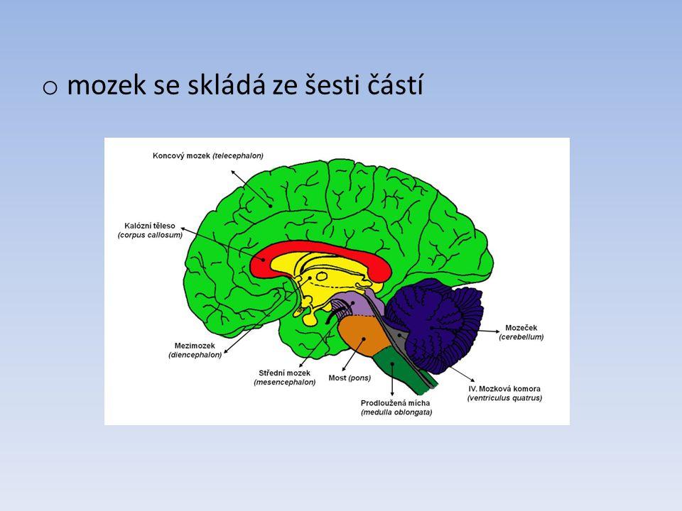 o zadní mozek – prodloužená mícha, most Varolův, mozeček o střední mozek o přední mozek – mezimozek, koncový mozek