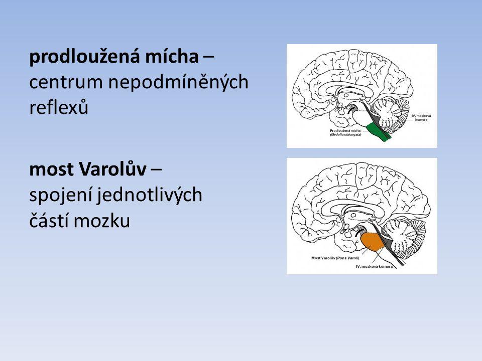 prodloužená mícha – centrum nepodmíněných reflexů most Varolův – spojení jednotlivých částí mozku