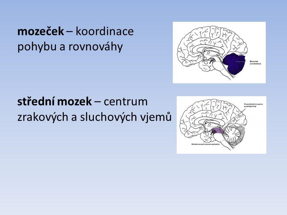 mezimozek – řídí činnost vnitřních orgánů, tělesnou teplotu koncový mozek – u člověka největší část mozku, skládá se ze dvou hemisfér, na povrchu je šedá kůra mozková, vytváří mozkové závity