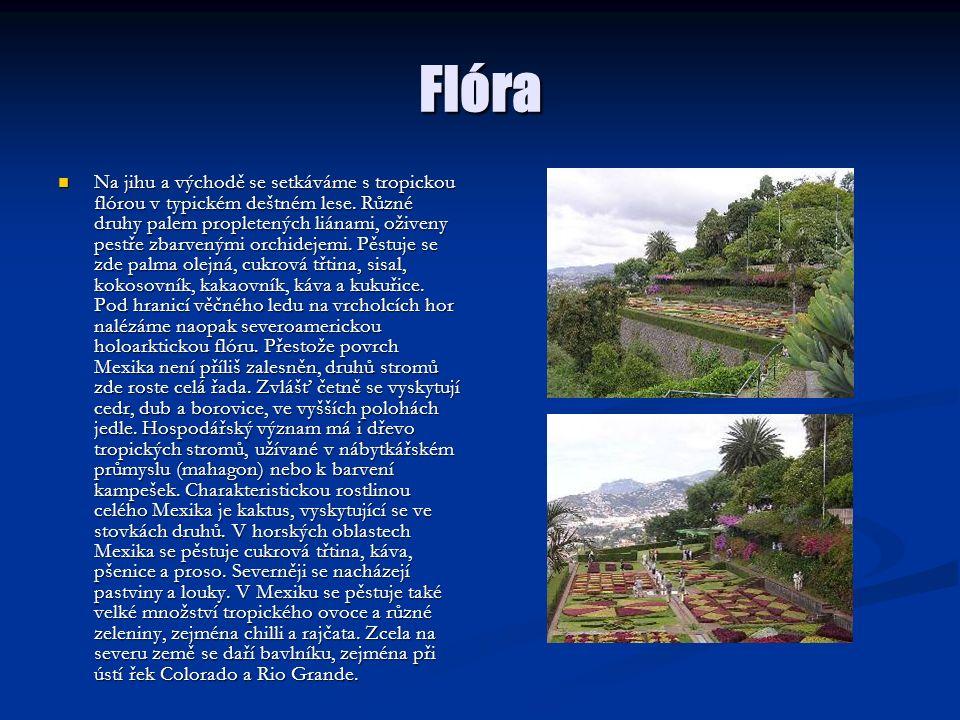 Flóra Na jihu a východě se setkáváme s tropickou flórou v typickém deštném lese. Různé druhy palem propletených liánami, oživeny pestře zbarvenými orc