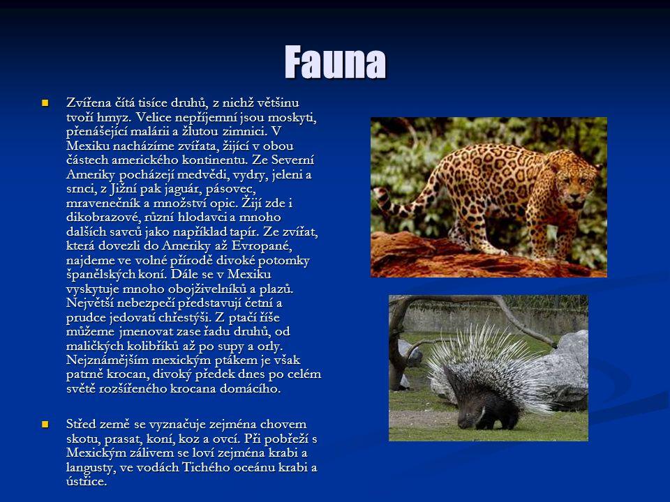 Fauna Zvířena čítá tisíce druhů, z nichž většinu tvoří hmyz. Velice nepříjemní jsou moskyti, přenášející malárii a žlutou zimnici. V Mexiku nacházíme