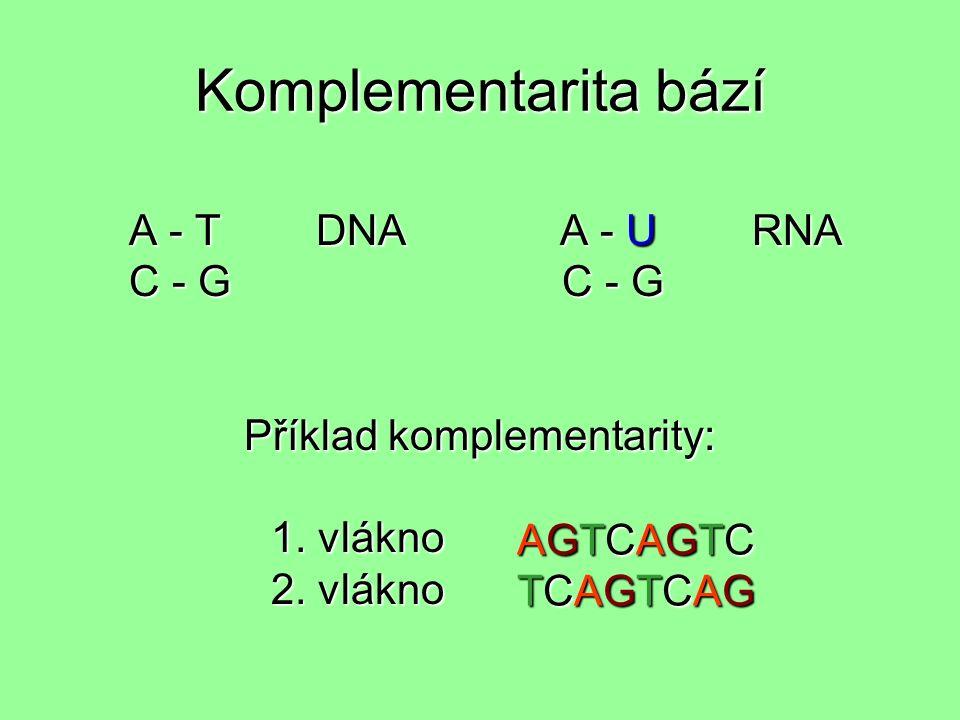 Komplementarita bází A - T DNA A - U RNA A - T DNA A - U RNA C - G C - G C - G C - G Příklad komplementarity: 1.